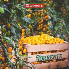 Томаты от la Torrente